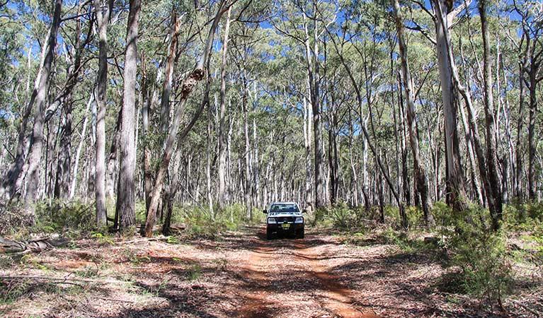 Barraba Track, Mount Kaputar National Park